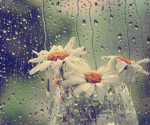 flowers and rain image
