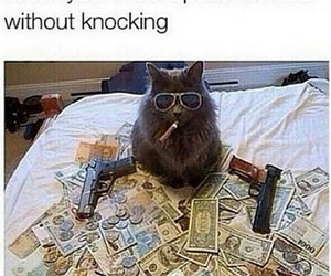 funny, cat, and money image