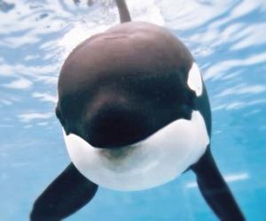 cutie, marine life, and ocean image