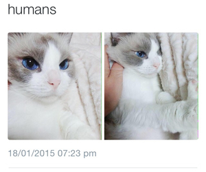 cat, beautiful, and humans image