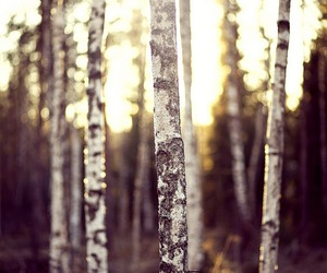 beautiful, finland, and forest image