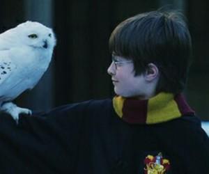 harry potter, hedwig, and hogwarts image