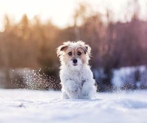 active, adorable, and animal image