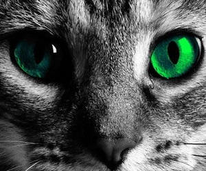 cat and green image
