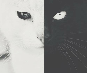black cat, white eyes, and black eyes image