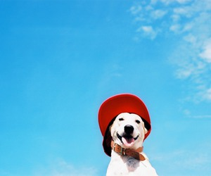 dog, happy, and hat image