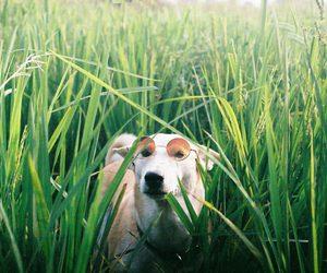 dog, happy, and sunglasses image
