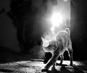 black&white, cat, and cats image