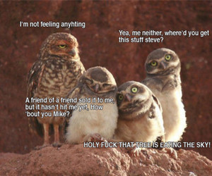 funny, owl, and drugs image
