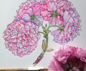 draw, flower, and pink image