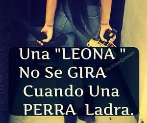 leona and corridos image