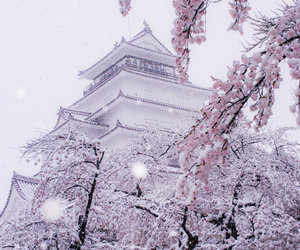japan, snow, and sakura image