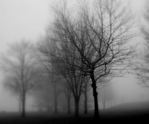 black and white, tree, and black image