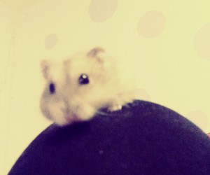 cutie, hamster, and my baby image