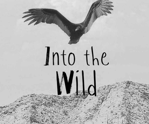 wild, wallpaper, and bird image