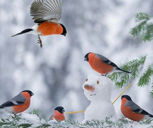 bird, winter, and snowman image