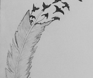 bird, draw, and feather image
