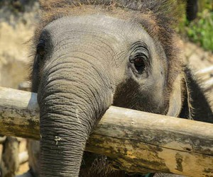 adorable, Animales, and elefante image