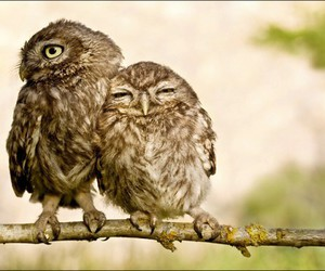 owls, love, and romantic image