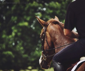 equestrian, horse, and horse riding image