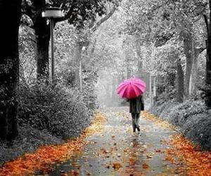 nature and umbrella image