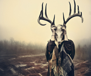 skull, nature, and deer image