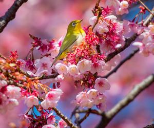 bird, blossom, and flowers image