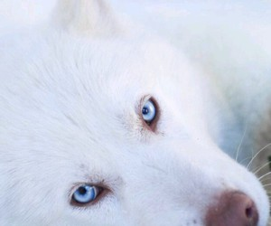 animal, white, and winter image