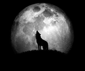 breaking dawn, moon, and wolf image