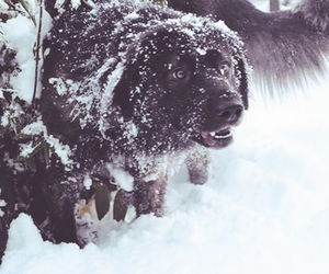 dog, norway, and snow image