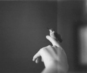bird, hand, and vintage image