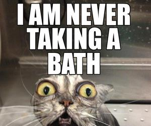 bath, cat, and funny image