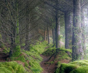 nature, path, and trees image