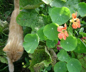 nature, plants, and cat image