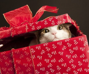 beautiful, surprise, and cats image