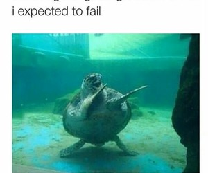 funny, turtle, and fail image