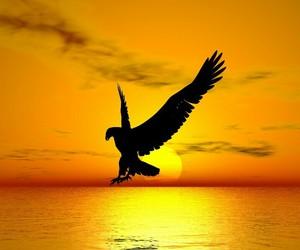 eagle, freedom, and sunset image