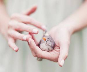 bird, hands, and animal image