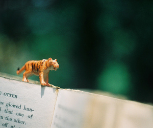 book, photography, and tiger image