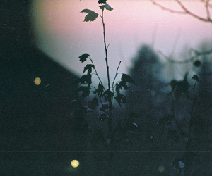 dark, flowers, and vintage image