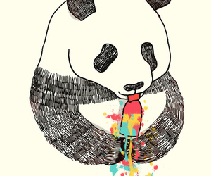 animal, background, and panda image