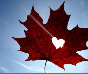 heart, leaves, and autumn image