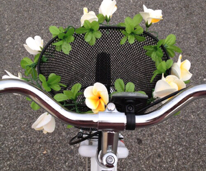 flowers, bike, and tumblr image