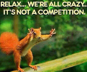 competition, relax, and squirrel image