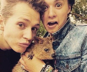 the vamps, james mcvey, and animal image