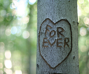 love, forever, and tree image