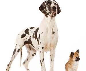 animal, boyfriend, and puppy image