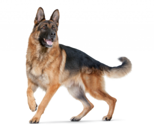 animal, puppy dog, and love animal image