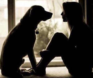 animal, dog, and we heart it image