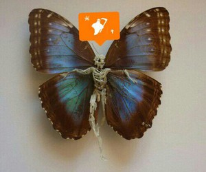 blue, butterfly, and dead image